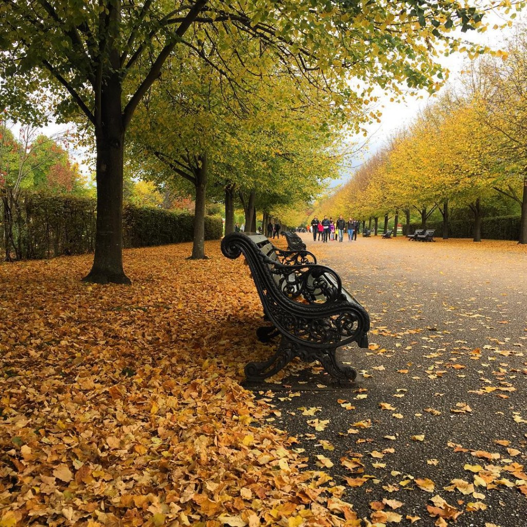 Beleza para os olhos e a alma. Como eu amo o outono! Beauty for the eyes and the soul. Just love the autumn ❤️ #floresemnottinghill #regentspark #friezeartfair #friezemasters #autumn #thisislondon #ilovelondon #prettycitylondon #maybeldner #visitlondon #lovegreatbritain #londres #london #BALondonCitySecrets #MyBritishOlympus